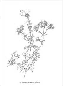 herbs coloring pages herbs and spices printable coloring pages