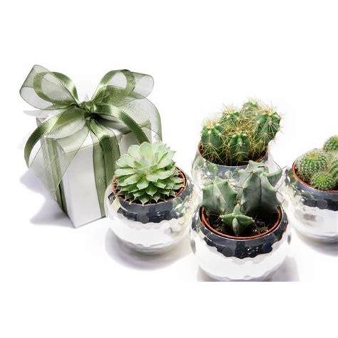 vasi bomboniere bomboniere piante grasse piante grasse bomboniere