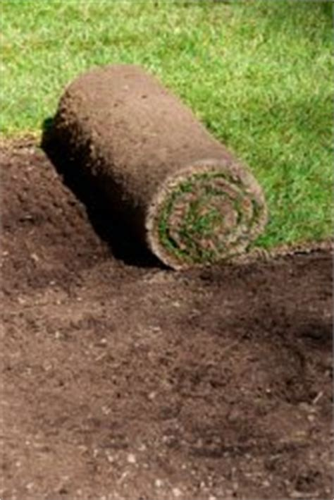 how much does it cost to sod a backyard how much does sod cost sod prices