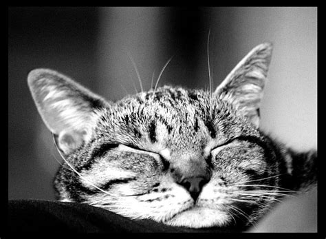 schlaf gut auf türkisch schlaf gut und mach die augen sch 246 n zu foto bild