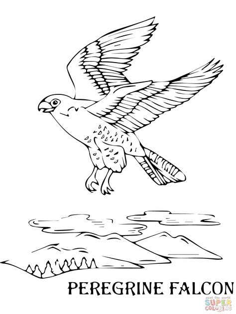 flying peregrine falcon coloring online wilderness trail