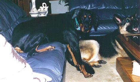 horse sitting on couch sasha 2005
