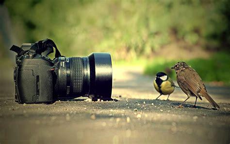 photography wallpapers pixelstalknet
