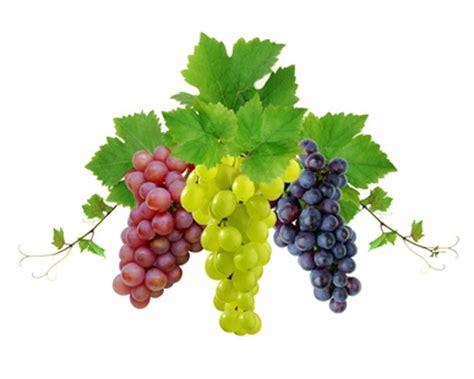imagenes las uvas uva propiedades de la uva beneficios de la uva historia de