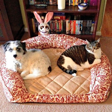 cats in dog beds versatile pet bed for cats and dogs from pet p l a y she