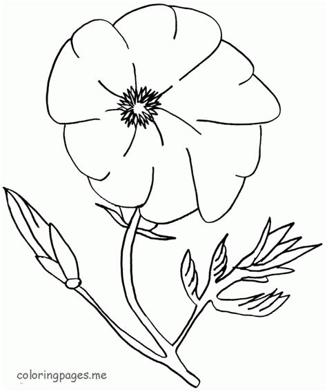 printable poppy leaves coloring pages poppy flower az coloring pages