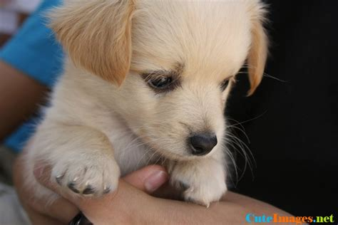 so puppies fluffy puppies breeds www pixshark images galleries with a bite
