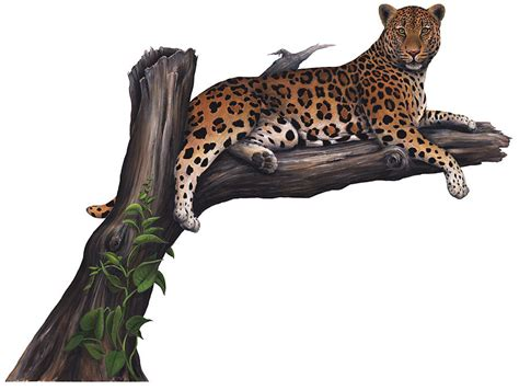 wildlife wall stickers leopard wall stickers decals wildlife mural ebay