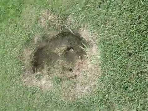 sinkhole in my backyard growing sinkhole impacts clermont homes doovi