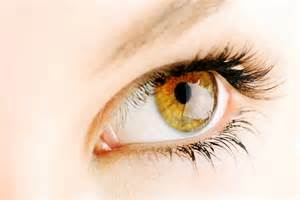 the color hazel hazel what determines hazel eye color