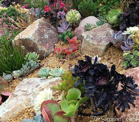succulent front yard design succulents work well planted on a hillside slope this