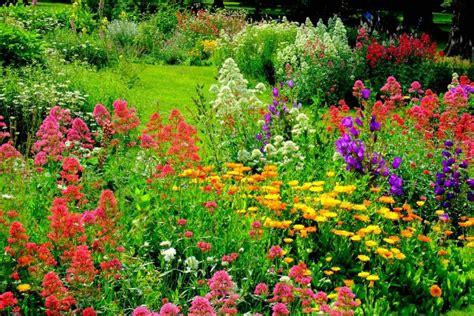pleasing color schemes focus on flowers indiana public