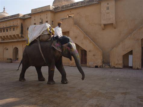 designboom elephant rahul mehrotra of rma designs hathigaon elephant village