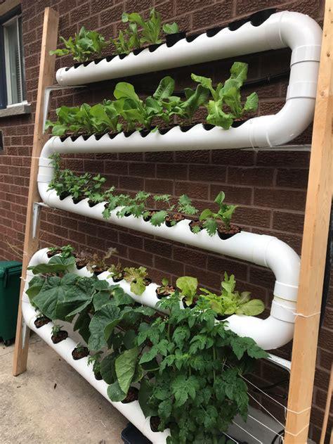 pin  malle cano  grow  food   hydroponics
