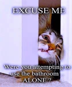 Cat Bathroom Door Meme Excuse Me Cat Meme Cat Planet Cat Planet