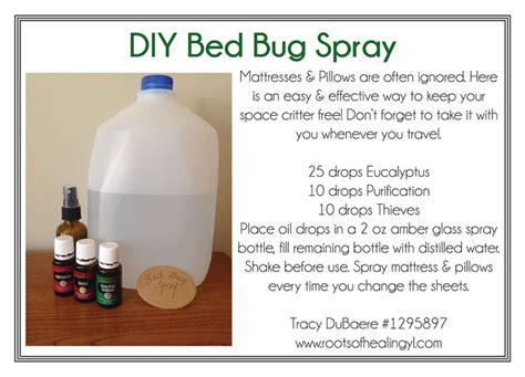 diy bed bug spray  essential oils oils pinterest bed bug spray sprays  oil