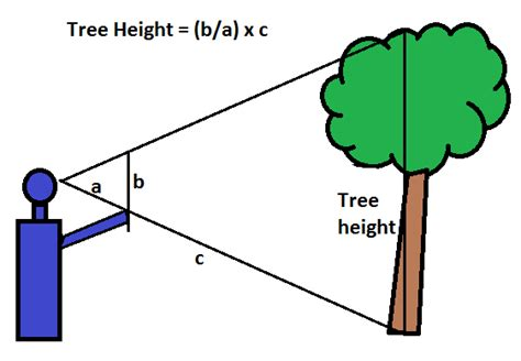 How To Measure L For Shade Size by Tree Height Measurement