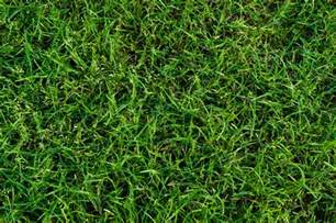 3 major turf types alii turf provides for golf courses