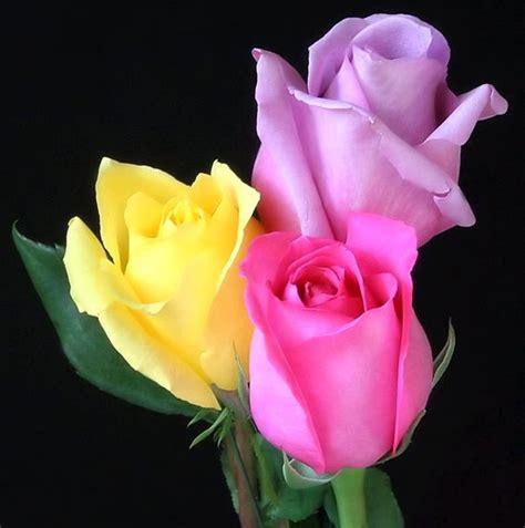 imagenes flores relajantes flores imagens e fotos para facebook pinterest