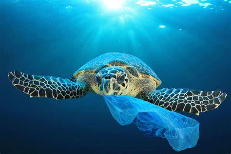 ocean plastic pollution australian marine conservation
