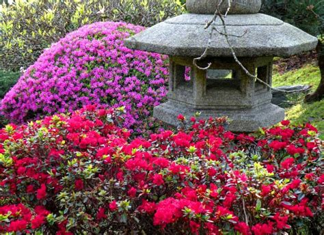 golden gate park  bloom san francisco recreation  park