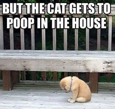 poop houses most liked puppies on facebook randomthoughts says