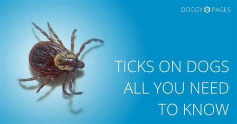 dog ticks in house how to kill ticks in the house 28 images tickencounter resource center gt tick