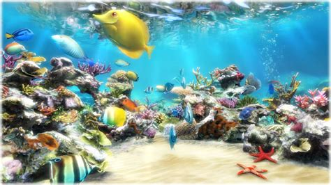 live wallpaper for pc full version clownfish aquarium live wallpaper ダウンロード