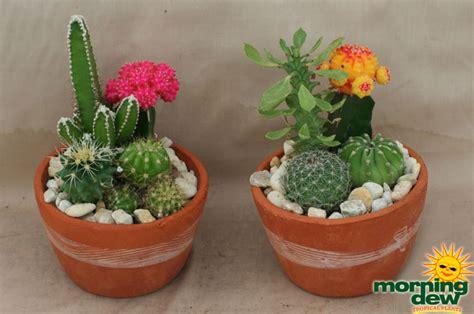 Indoor Spice Garden Kit - cactus terrarium morning dew tropical plants