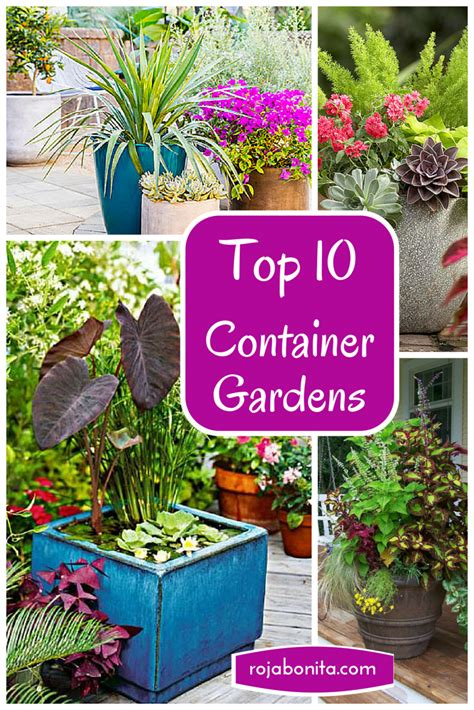 best plants for container gardening top 10 container gardens for your patio rojabonita