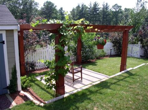 grape vines growing over pergola pergolas arbors
