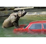 Cool Animals Pictures Car Is The Best Target When