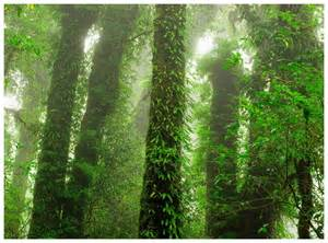 rainforest wall mural rainforest mural by mr perswall wallpaper direct