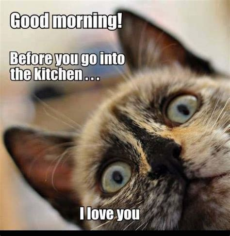 Cute Funny Cat Memes - funny good morning pics to start a day funny morning pic