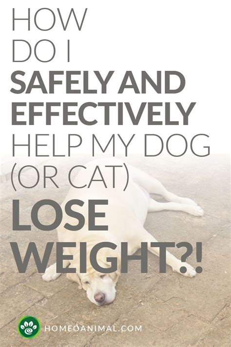 how do i safely and effectively help my dog or cat lose