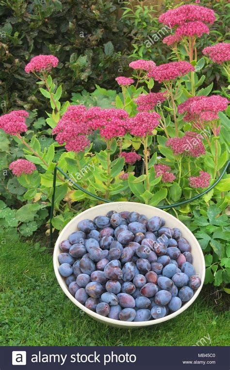 alberi in vaso alberi da frutta in vaso awesome piante da frutto a