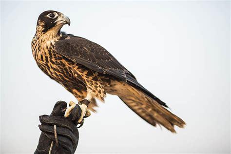 2016 bentley falcon 2016 bentley falcon 8 images 2016 ford ecosport