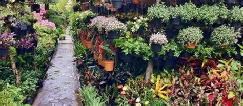 berbagai jenis tanaman hias  hiasan rumah minimalis