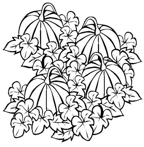 pumpkin harvest coloring page 1000 images about embroidery seasons on pinterest