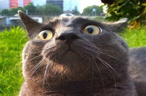 fix dell  cat urine smell dell  replace