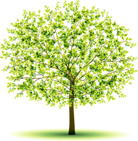 Creative Green Tree Design Vector Graphics Free Vector In Encapsulated Postscript Eps Eps Creative Eco Green Tree Logo Vector Free