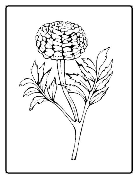 coloring pictures of realistic flowers realistic flower colouring pages realistic flower