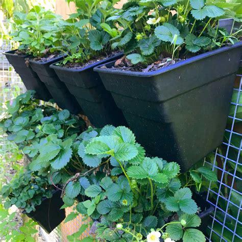 wall garden pots organic motion