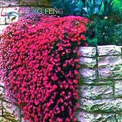 Rock Garden Plants For Sale Popular Decorative Evergreens Buy Cheap Decorative Evergreens Lots From China Decorative