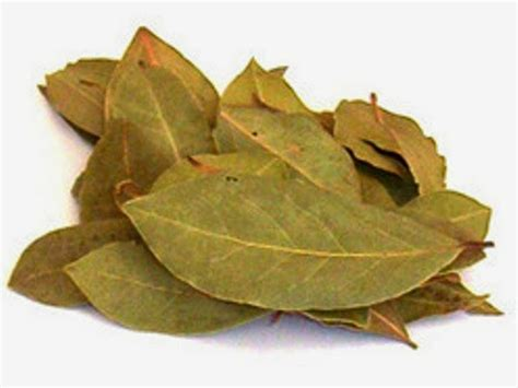Daun Retsleting Gigi Kwalitas A Coklat cara uh menyembuhkan sakit gigi berlubang dengan daun