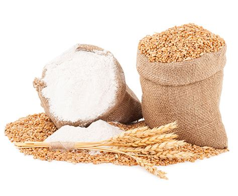 whole grains buy where to buy organic whole grains in bulk epigrain