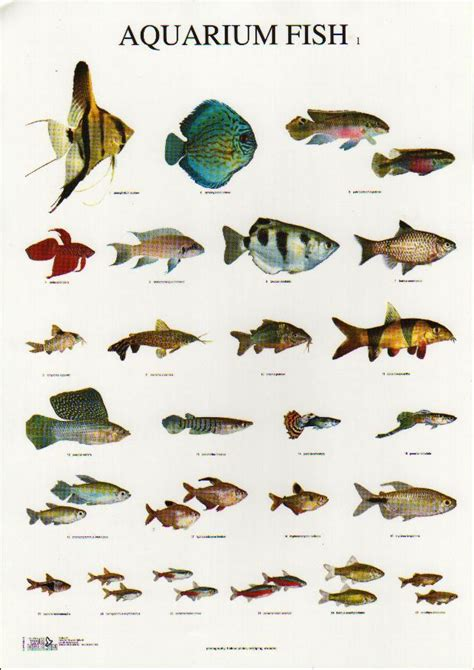 types of aquarium fish exotic freshwater aquarium fish species look here styfisher biz