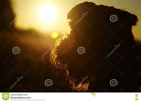 love the richness of burnt orange burnt sunrises abstract background colors silhouette dog against the