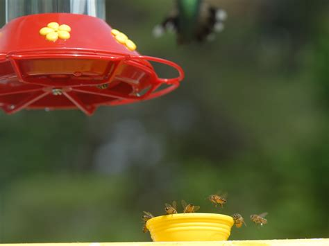 hummingbirds bees at your feeders