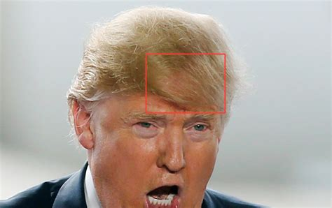 is donald trump s hair a 60 000 weave a gawker